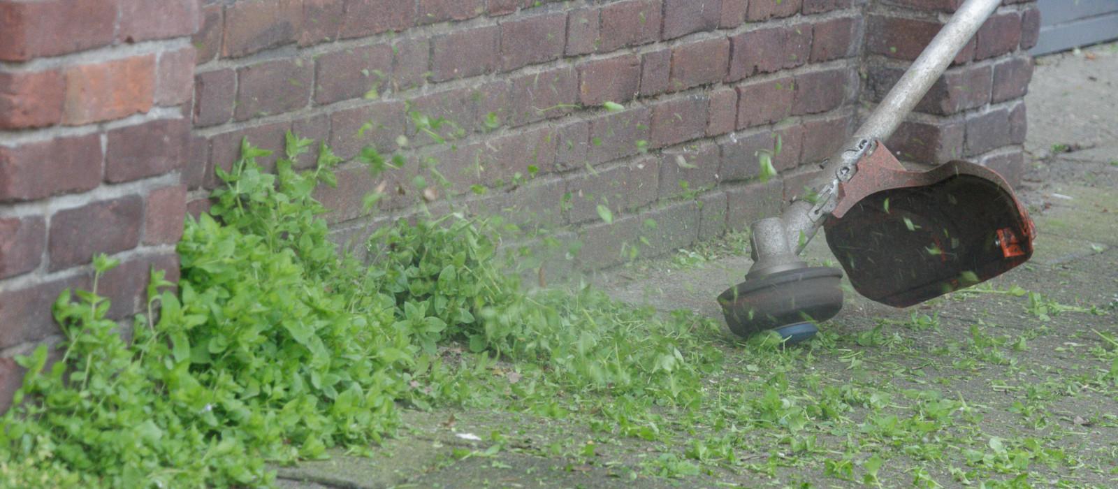 Groeizaam weer: extra inspanning onkruidbeheersing