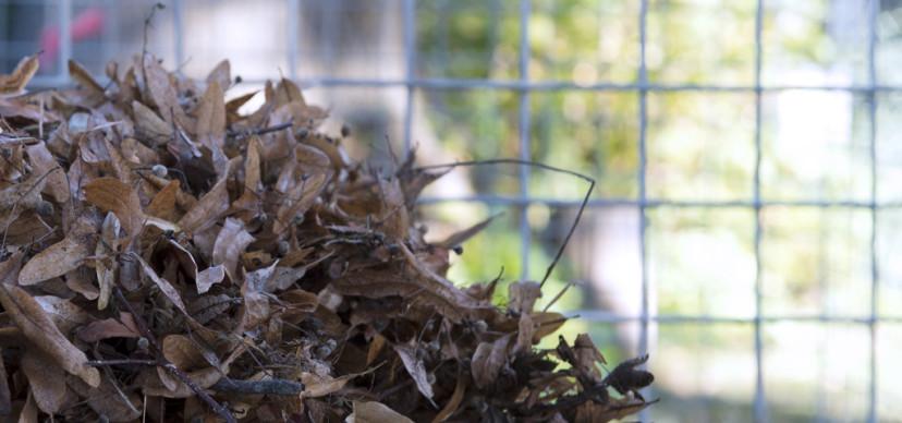 De bladkorven staan er weer