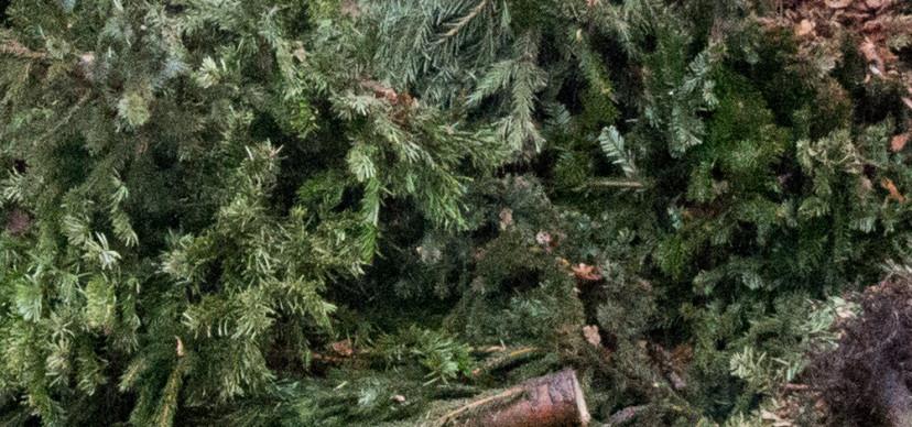 Ophaalservice kerstboom Epe