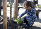 Nieuwe boompjes voor Anne Frankschool