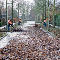 Deventer wordt bladschoon!