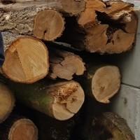 Vellen van risicobomen en herplant