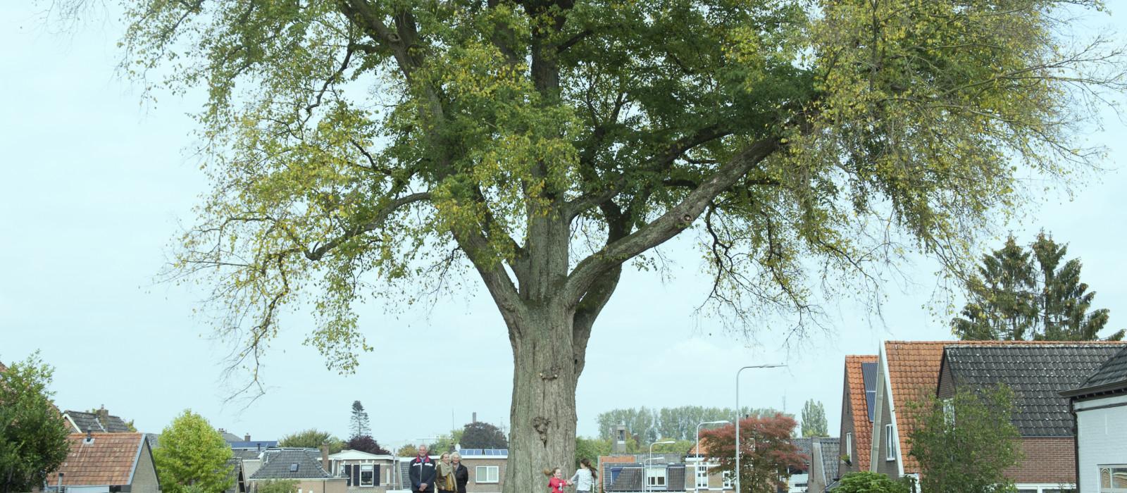 Speelpleinboom vol verhalen
