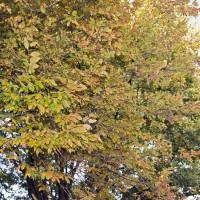Bekijk de nieuwe rubriek Buitengewone boom