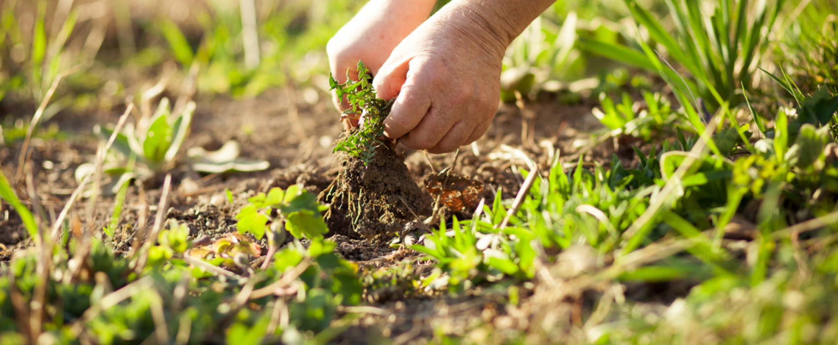 Tuintips: duurzaam onkruid beheersen