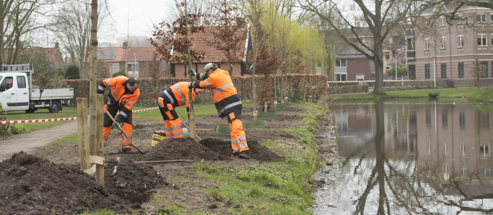 Jonge en duurzame bomenrij voor Westerbleek