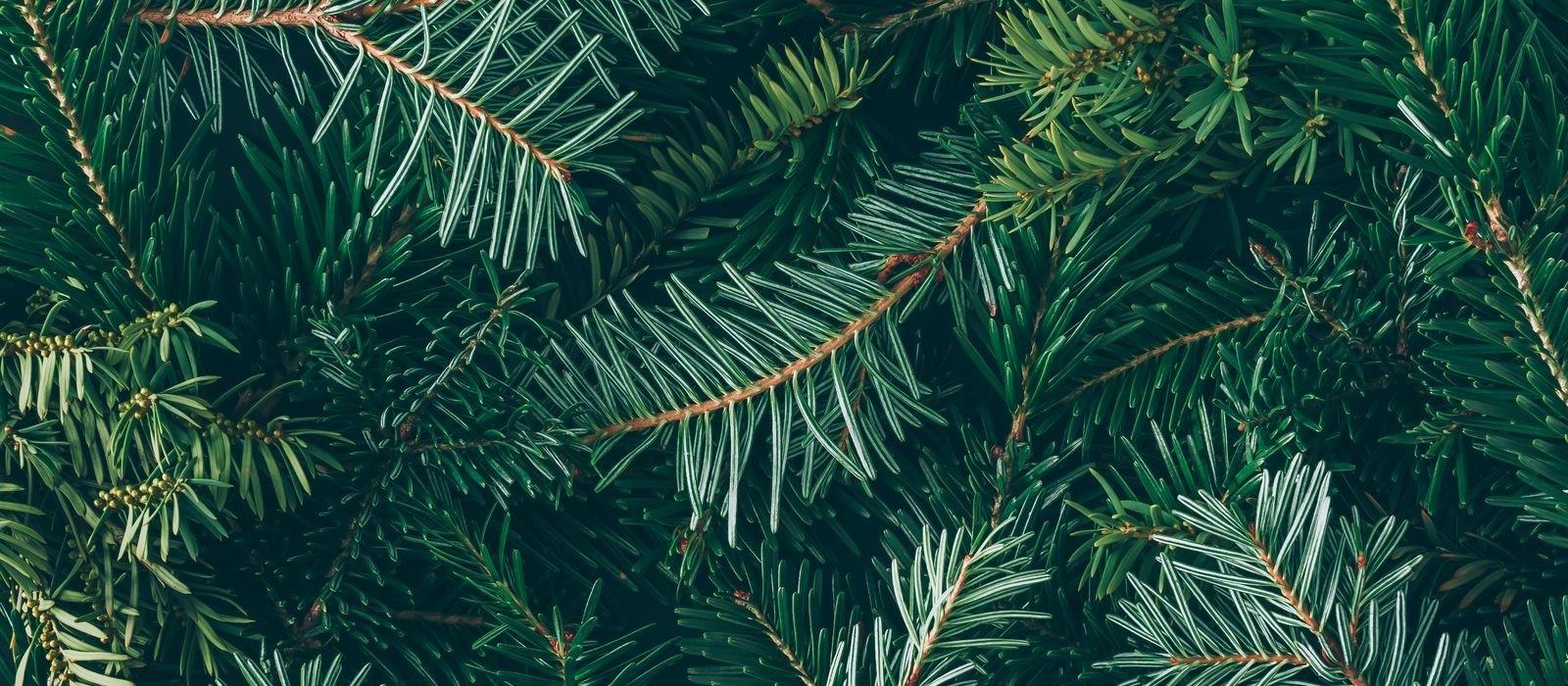 Kerstboominzameling Apeldoorn