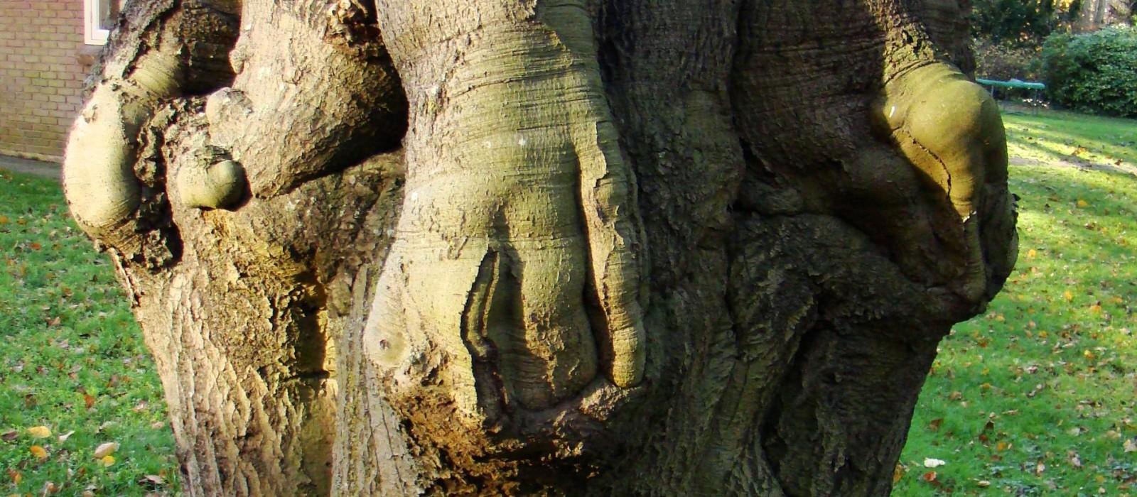 Een BuitenGewone boom in Joppe!